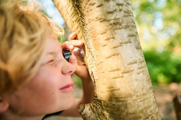 Poika katsoo luupin läpi puun kuorta